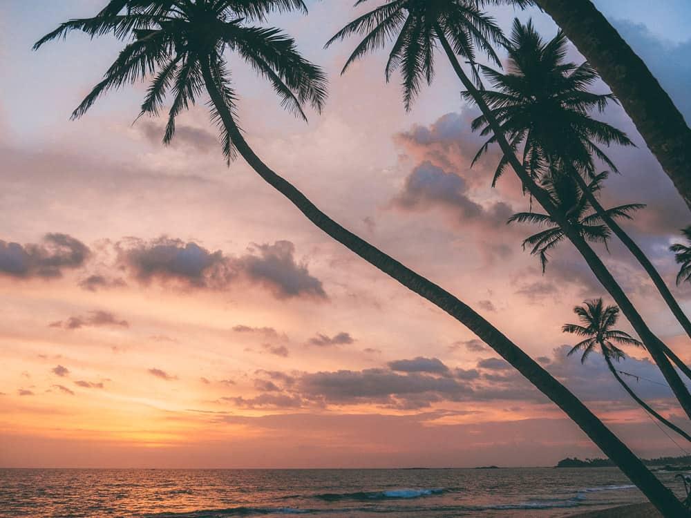 instafamous rope swing, palm tree rope swing sri lanka, palm tree rope swing, dalawella beach, unawatuna, unawatuna beach, dream cabana, dalawella rope swing