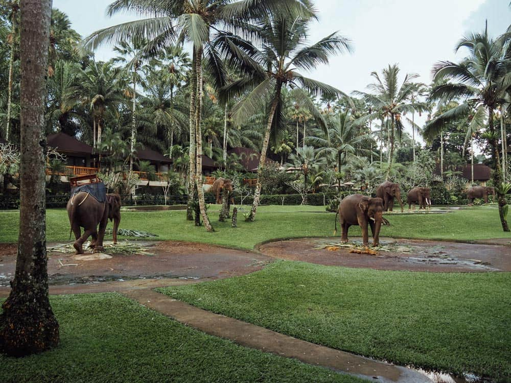 MASON ELEPHANT SANCTUARY & LODGE IN BALI, INDONESIA