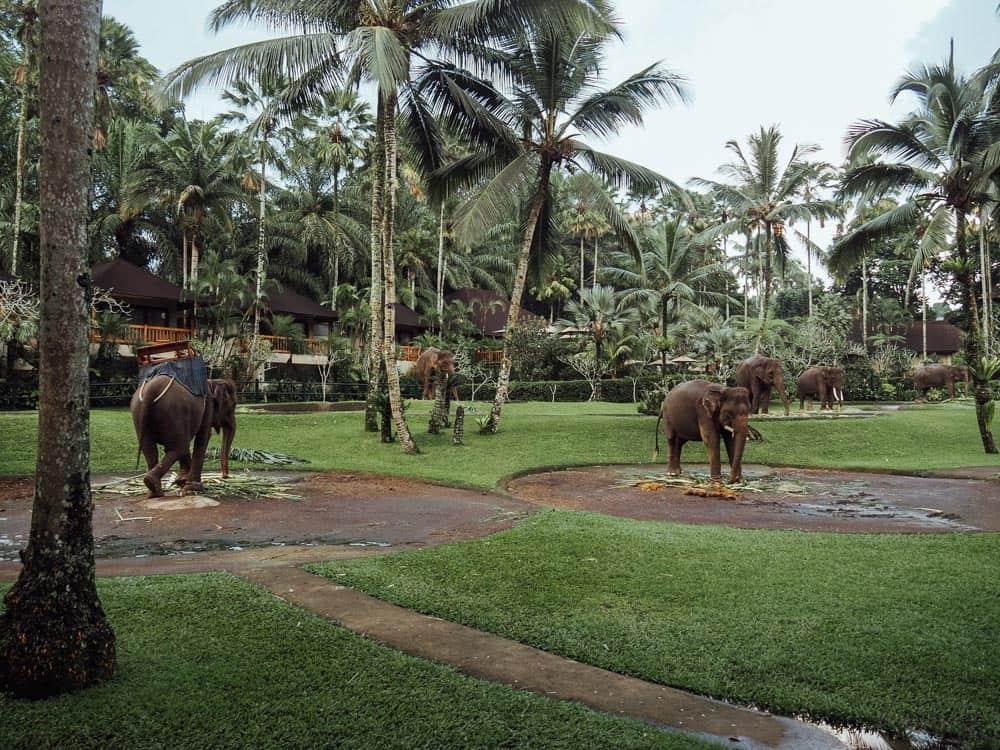 elephant sanctuary bali, elephant safari park bali, elephant safari bali, elephant park bali, bali safari park, elephant ride bali, elephant bali, elephant safari park bali price, elephant safari, elephant safari park ubud, elephant safari ubud, elephant park ubud, elephant sanctuary ubud, elephant ride ubud, elephant lodge bali, taro elephant park bali, elephant tour bali, taro elephant park