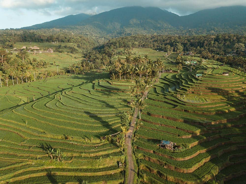 Jatiluwih Rice Terraces Unesco Cultural Site In Bali Jonny Melon