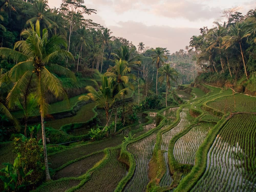 TEGALLALANG RICE TERRACES IN UBUD, BALI