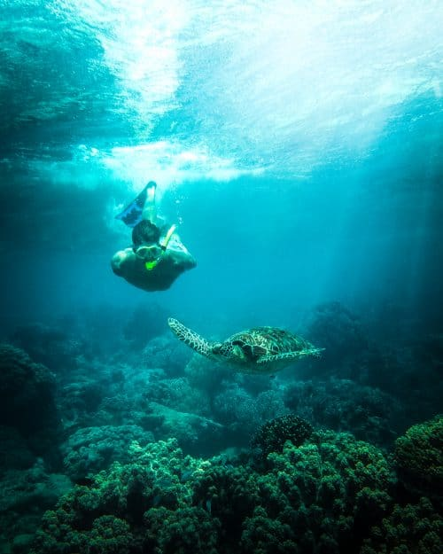 dumaguete tourist spots, things to do in dumaguete, what to see in dumaguete, dumaguete, rizal boulevard, dumaguete itinerary, apo island, apo island snorkelling tour, apo island diving, apo island dumaguete, apo island snorkelling