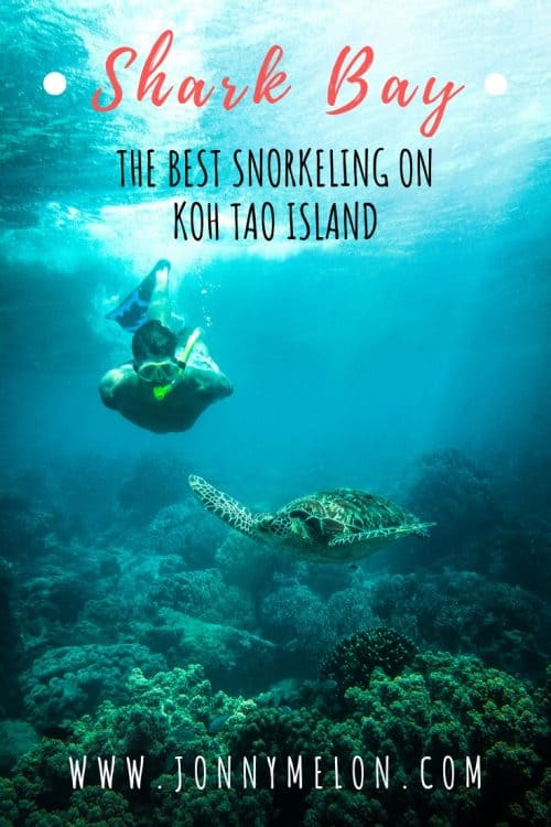 shark bay koh tao, koh tao shark bay, shark island koh tao, sharkk beach koh tao, best beaches koh tao, koh tao beaches, beaches koh tao, beaches in koh tao, beaches on koh tao, koh tao best beaches, best beaches koh tao