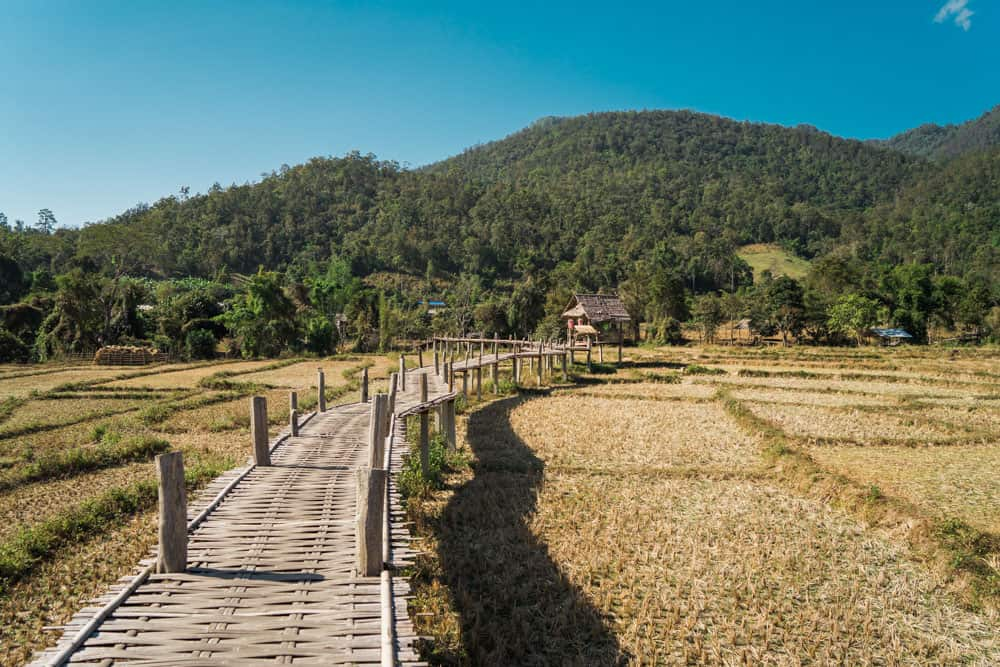 bamboo bridge pai