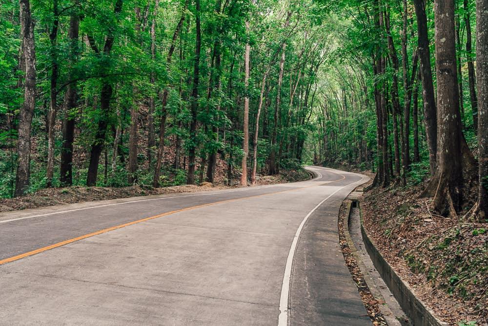 bilar man made forest, bilar man-made forest, loboc man made forest, bilar forest, man made forest bohol, man made forest in bohol