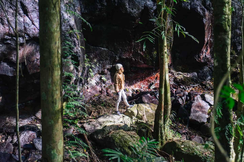box forest circuit, lamington national park walks, lamington national park, lamington national park hikes, oreillys rainforest retreat