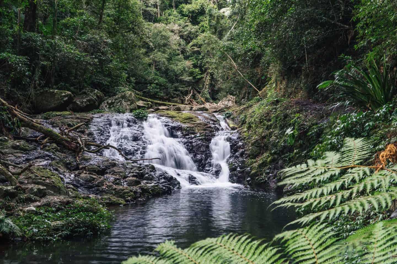 nugurin falls, box forest circuit, lamington national park walks, lamington national park, lamington national park hikes, oreillys rainforest retreat