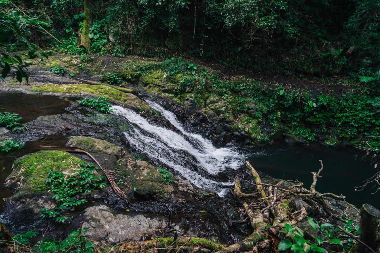 nugurin falls, darragumai falls, box forest circuit, lamington national park walks, lamington national park, lamington national park hikes, oreillys rainforest retreat