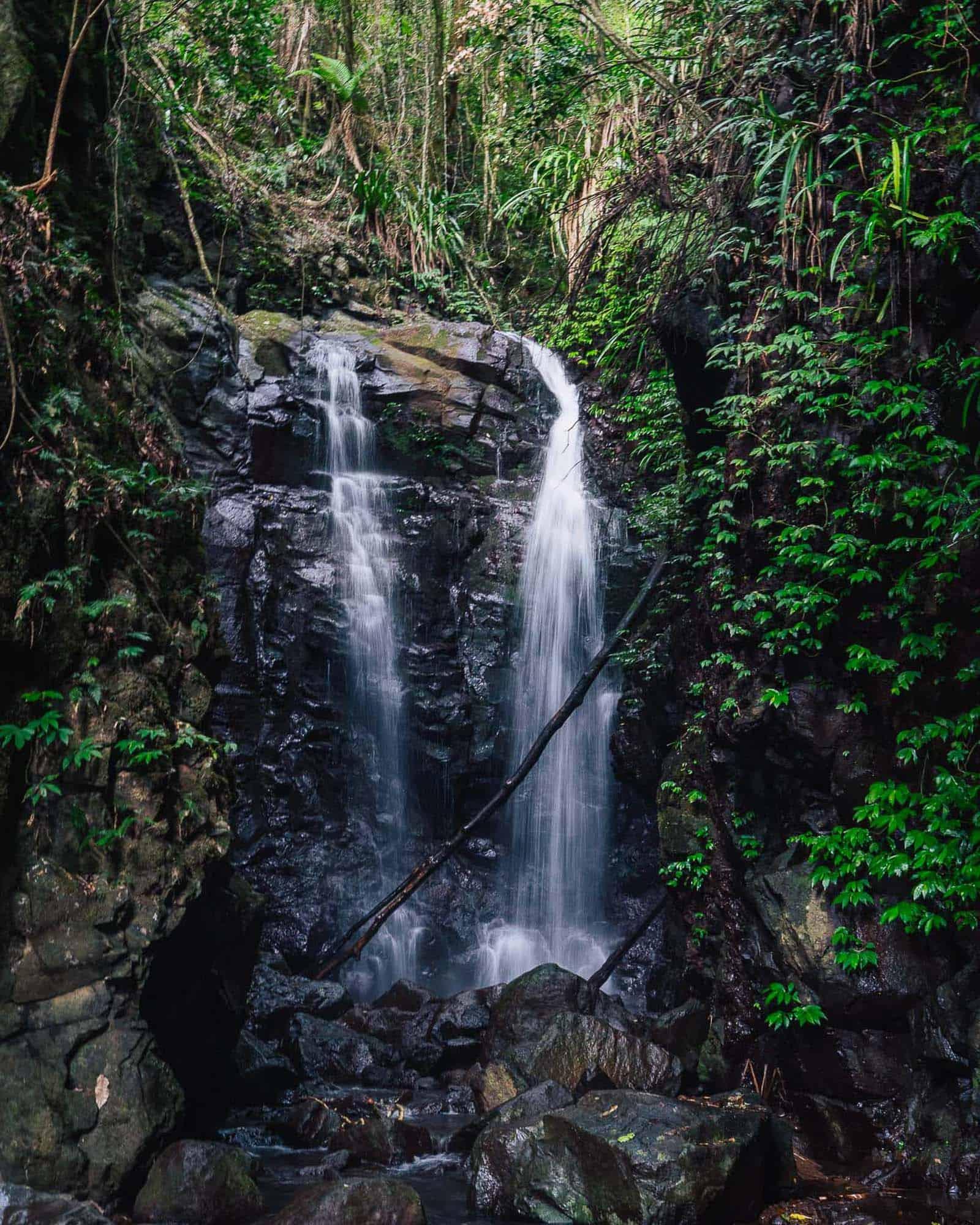 box log falls, box forest circuit, lamington national park walks, lamington national park, lamington national park hikes, oreillys rainforest retreat