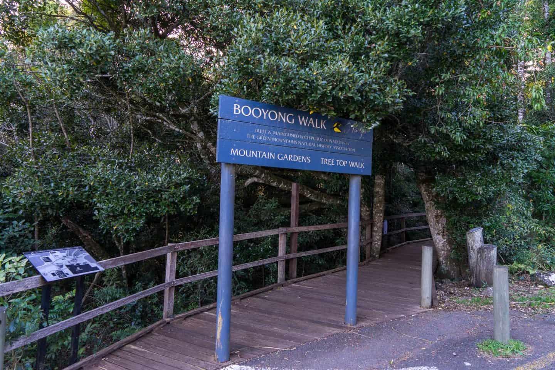 lamington national park tree top walk, lamington tree top walk, oreillys treetop walk, lamington national park walks