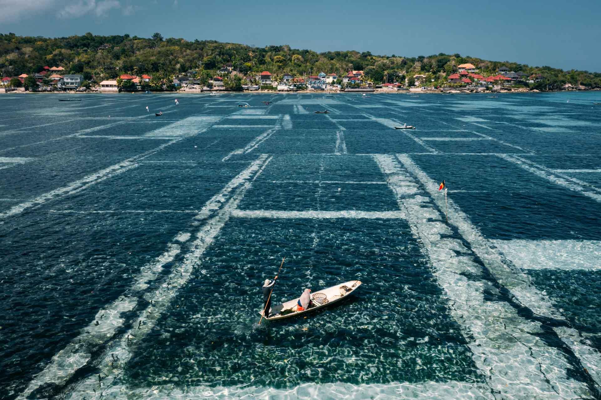 things to do in nusa lembongan, nusa lembongan, lembongan, lembongan island, seaweed farms nusa lembongan