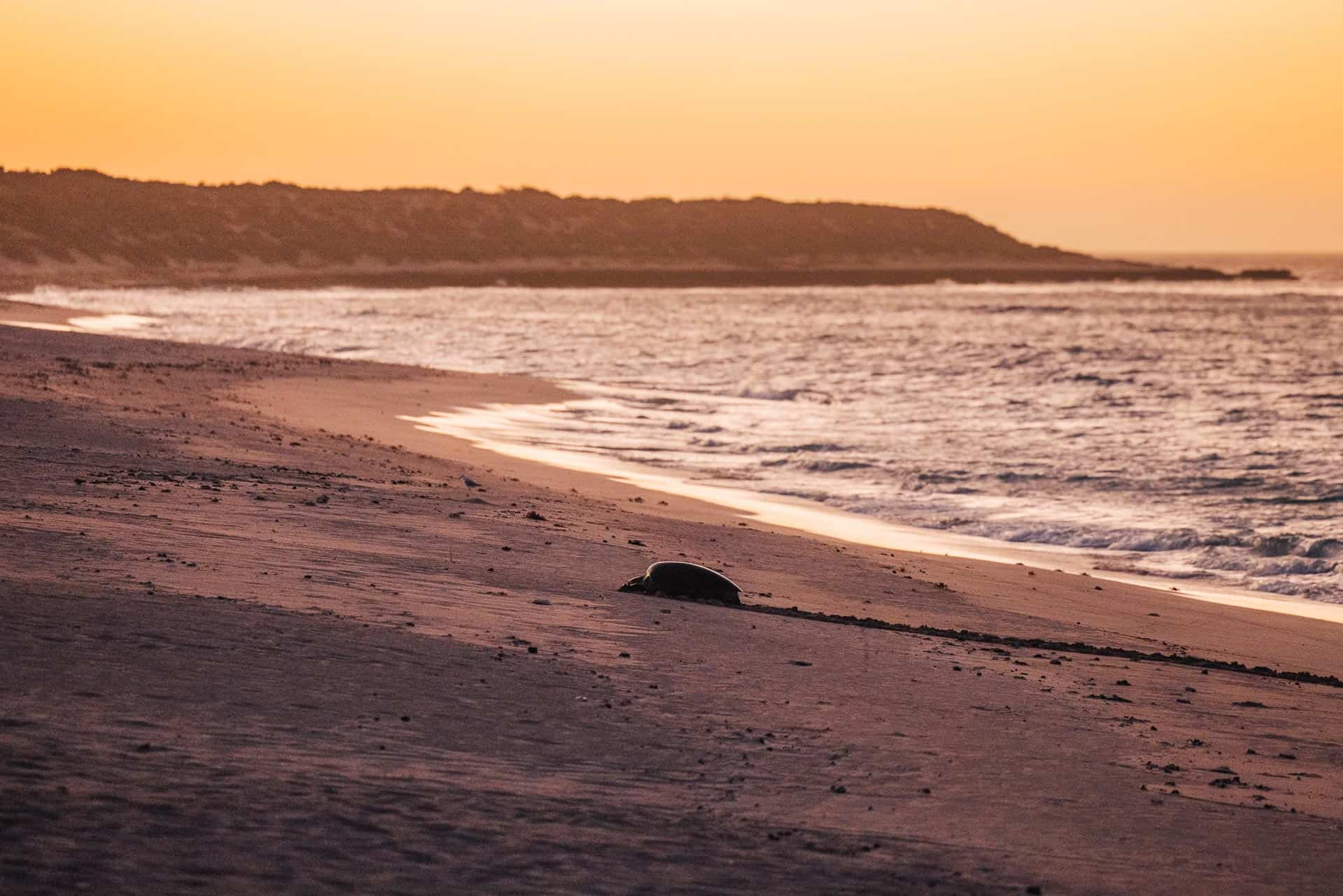 jurabi turtle centre, exmpouth turtles, things to do in exmouth, exmouth western australia, what to do in exmouth, exmouth things to do